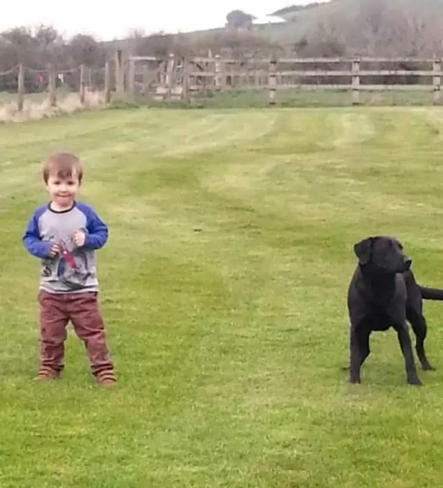 preschooler and labrador