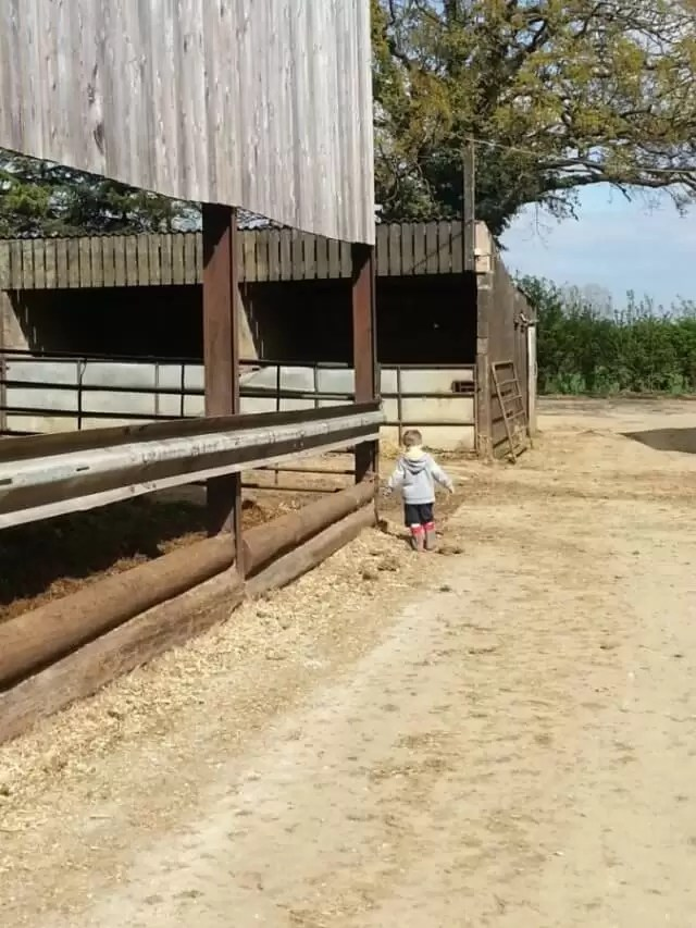 boy exploring the farmyard