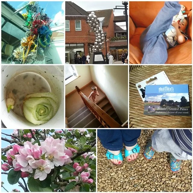 #365 project 365 photo round up for week 18