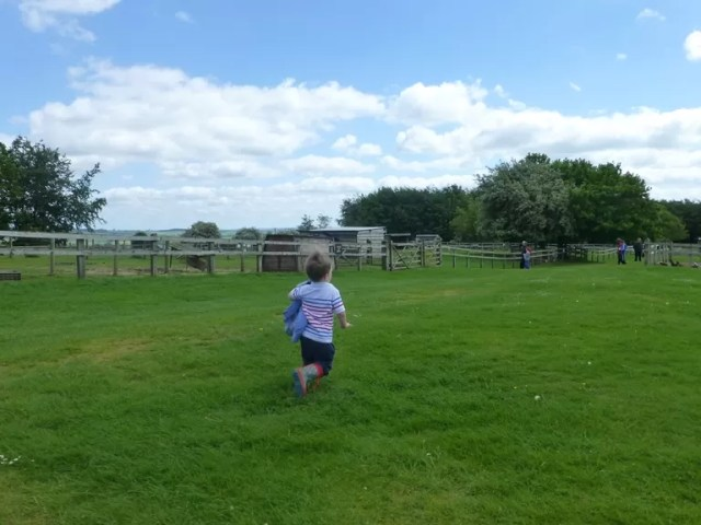 running away at cotswold farm park