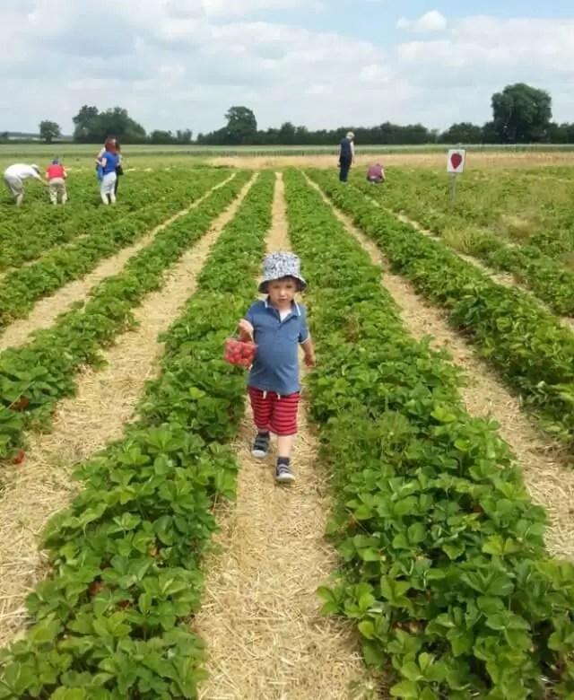 strawberry fields 2..