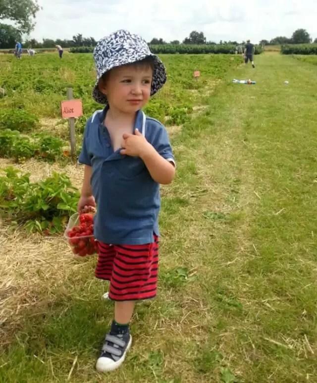 strawberry picking 3..