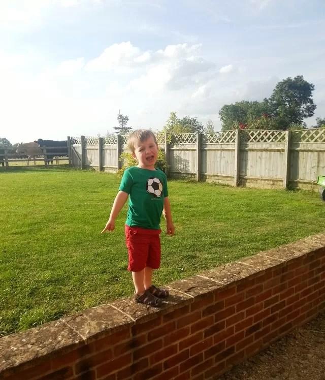 balancing on the garden wall
