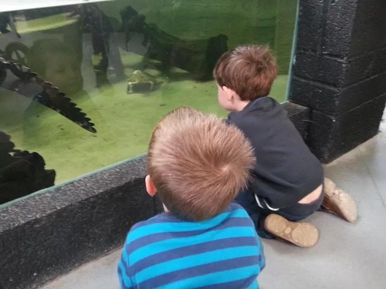 watching crocodiles