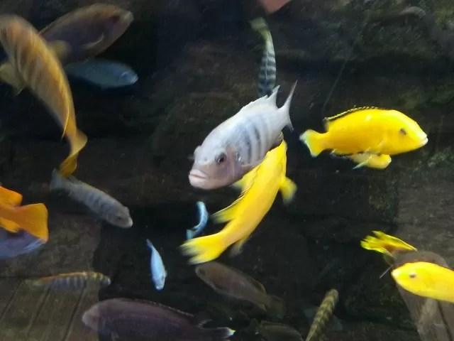 fish at bristol aquarium