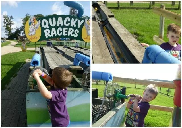 quacky racing ducks at hatton