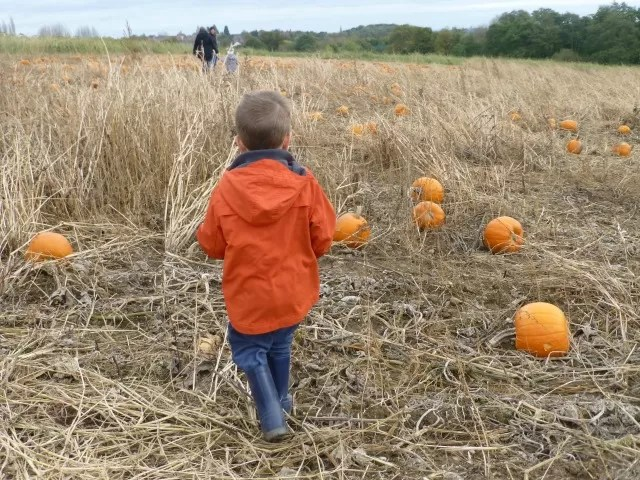 choosing pumpkins