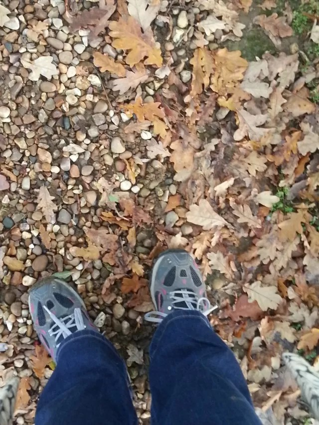 autumn leaves - looking down