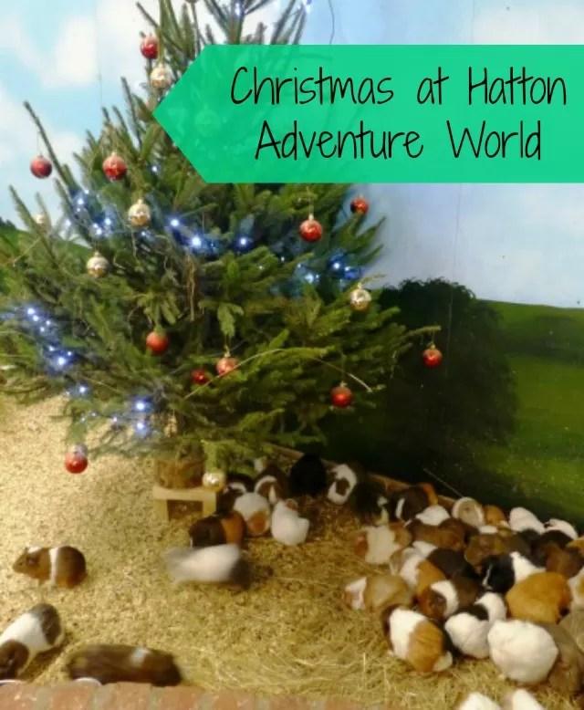 guinea pigs christmas tree at hatton