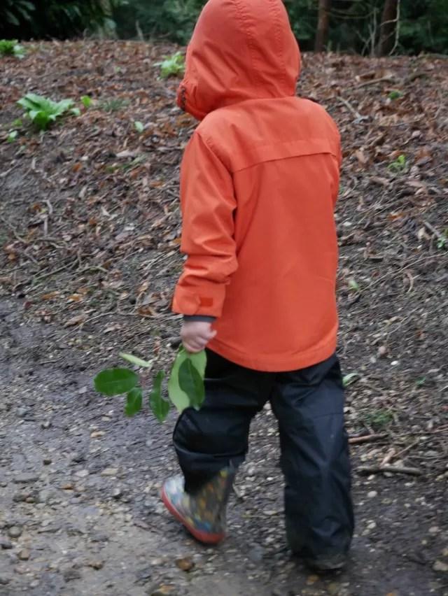 picking leaves