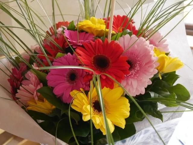 serenata flowers gerberas