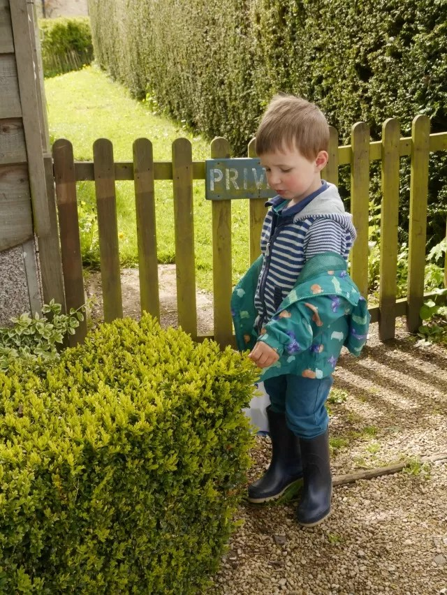 checking the hedge