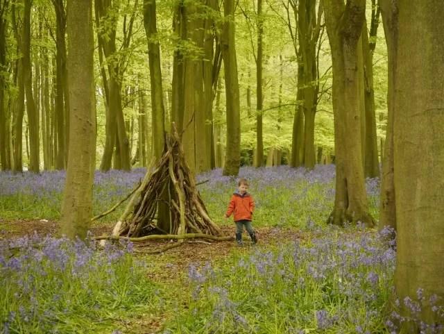 den in Badbury Clump - bluebell woods