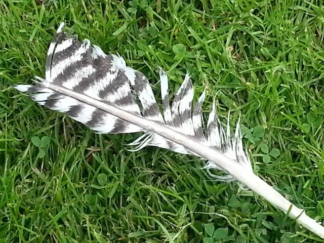 feather on grass