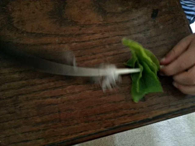 feather and leaf wand