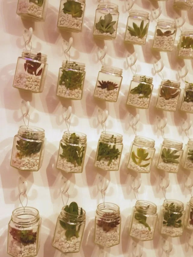 Decorative jars of succulents
