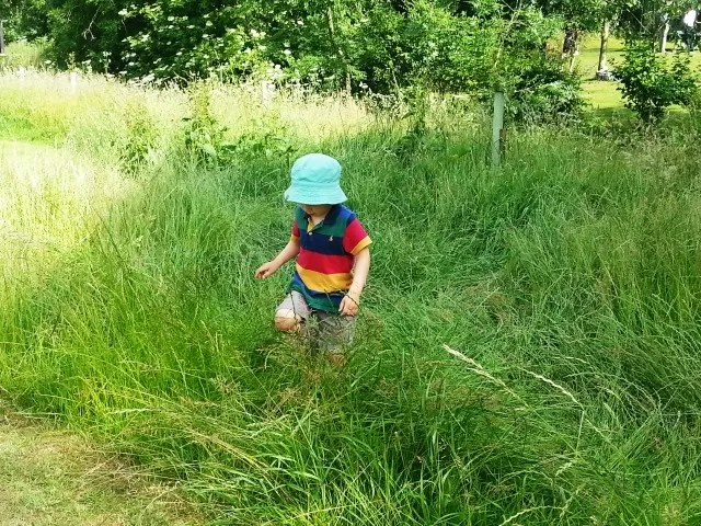 Swishing through the grass