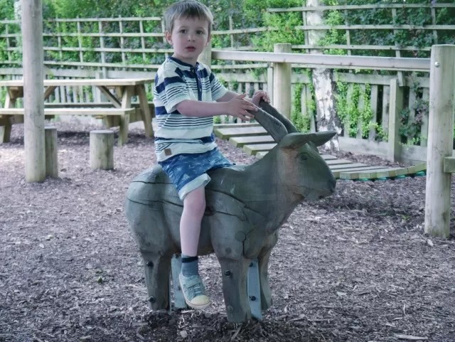 riding a goat