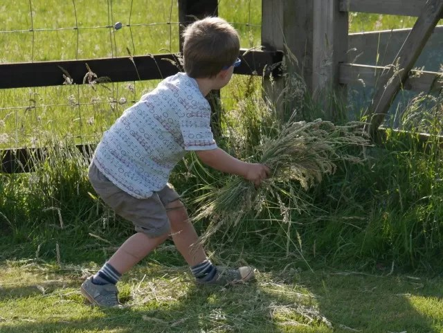gathering grasses and tidying the garden
