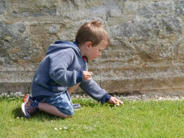 Picking daisies and dandelions