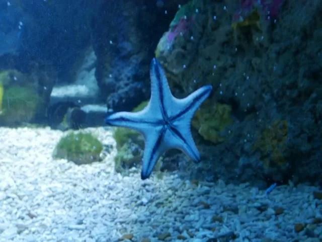 Starfish at Sealife centre