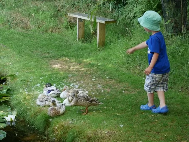counting the ducks at Bennetts Water Gardens
