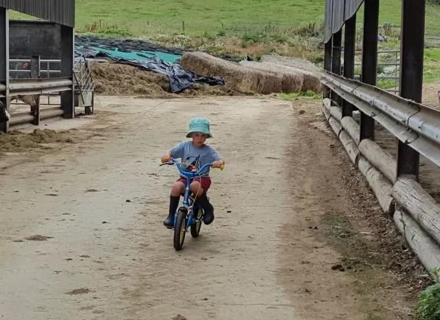 cycling through the farmyard