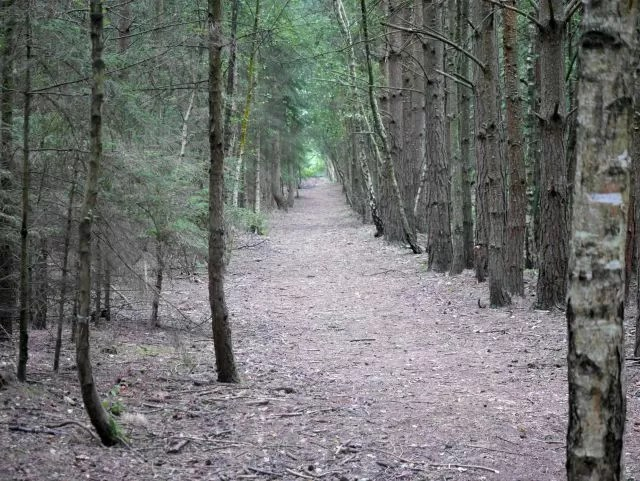 an aisle of trees at Rushmere Country Park