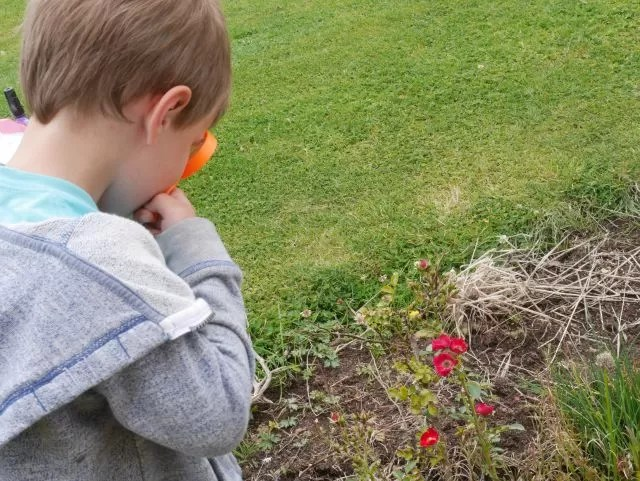 looking for bugs on flowers