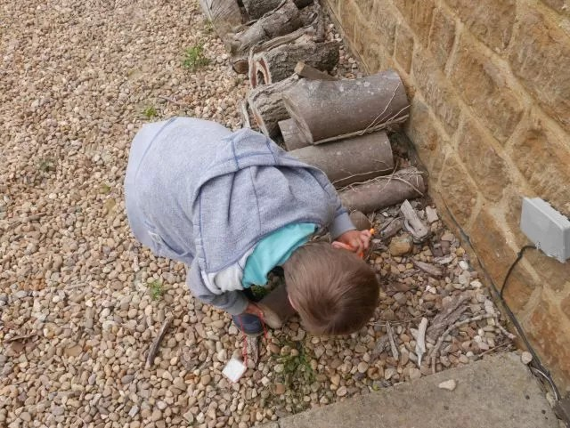 looking for bugs under logs