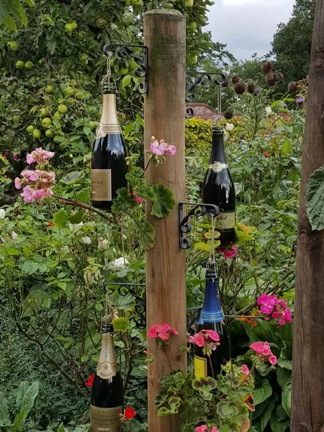 champagne bottles display