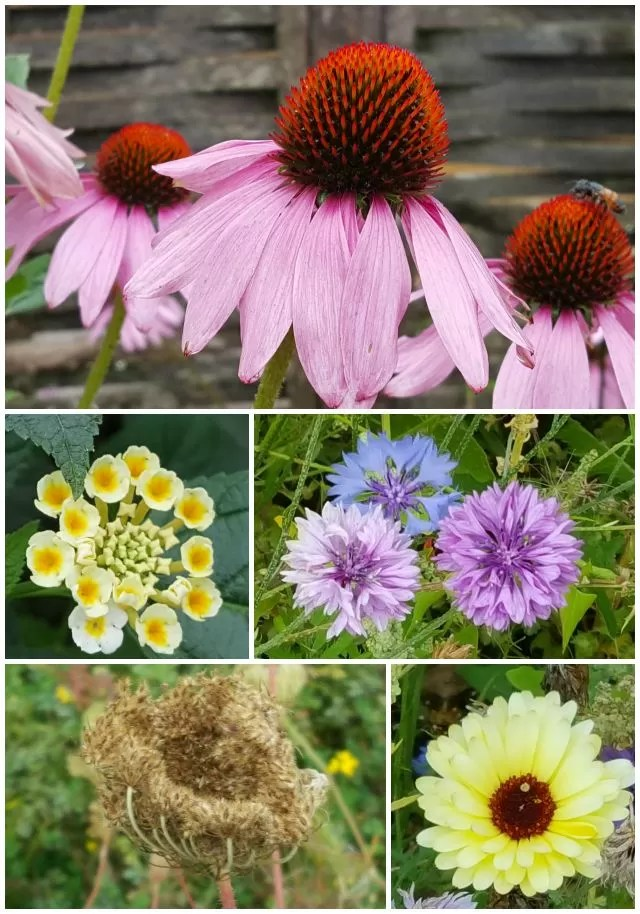 flower collage at Butterfly world project