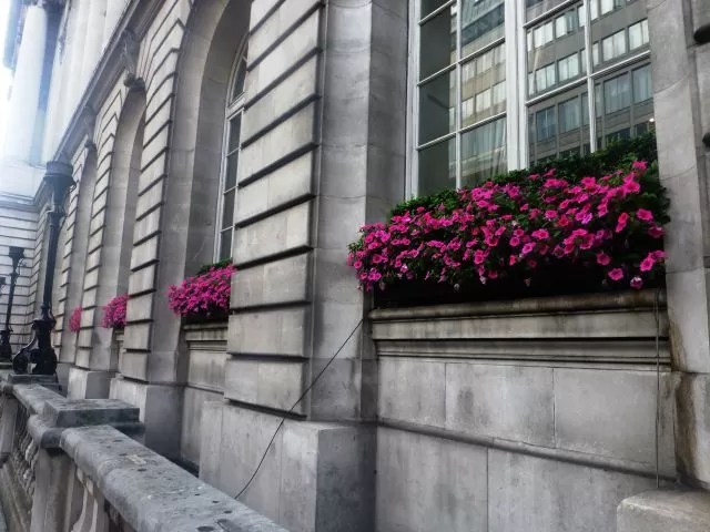flowers and buildings in London