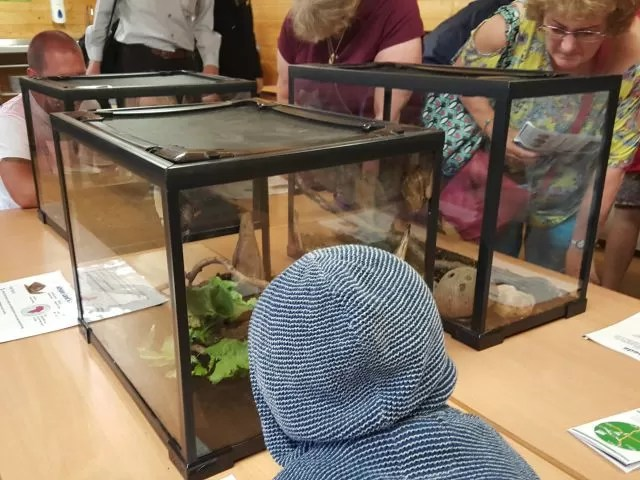 looking at stick insects butterfly world project