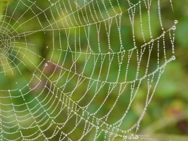 spiders web with dew My Sunday Photo