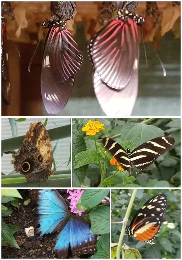 tropical butterflies at Butterfly world project