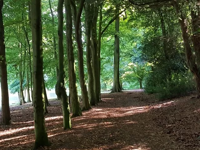 avenue of trees at Wroxton Abbey