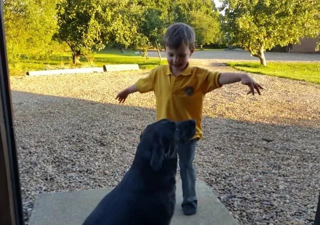 boy training dog