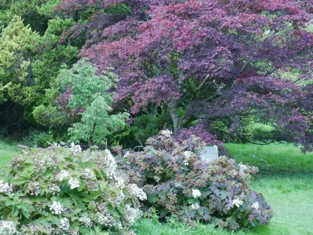 colourful trees at Batsford