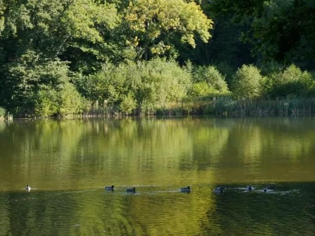 ducks on Wroxton Abbey lake