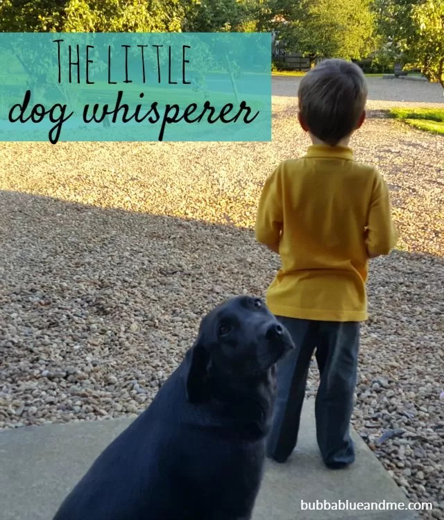 the little dog whisperer - Bubbablue and me