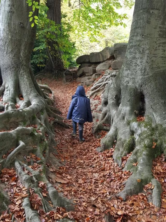 Walking through leaves and tree roots