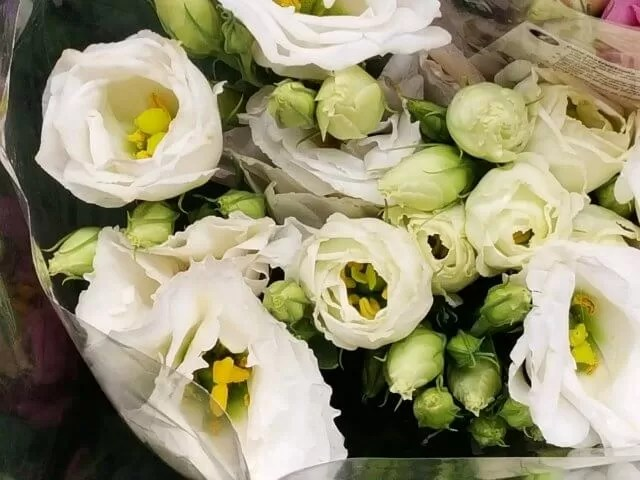 flowers in whites