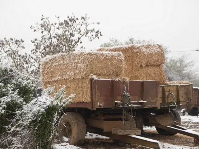 hay bales on a trailer in snow