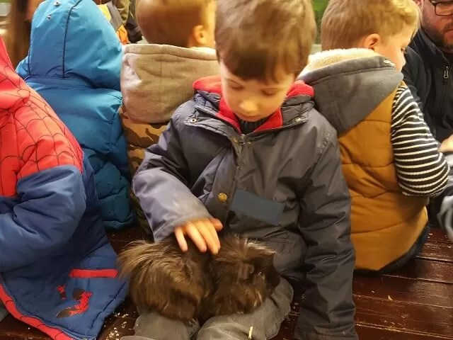 stroking a guinea pig at Hatton Country World