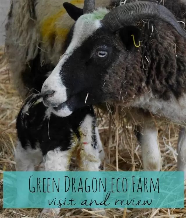 Green Dragon eco farm visit and review