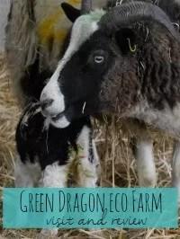 Green dragon eco farm