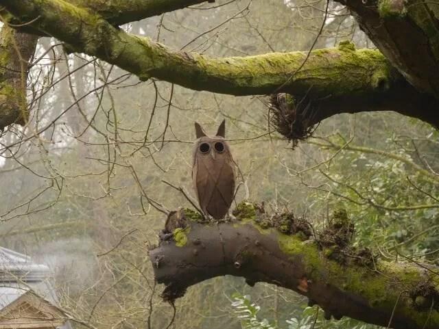 owl at Waddesdon Manor woods