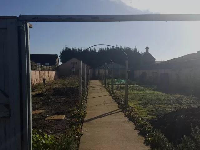 sunlight over the Green Dragon eco farm garden