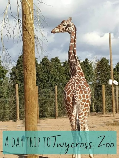 day trip to Twycross zoo - Bubbablue and me